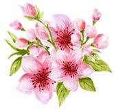 Akwarela bukieta wianku botaniczna ilustracja Chińskie kwiatów elementów menchie kwitnie kolekcję z liśćmi i okwitnięcie ręką royalty ilustracja