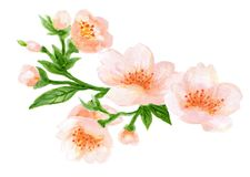 Akwarela bukieta wianku botaniczna ilustracja Chińskie kwiatów elementów menchie kwitnie kolekcję z liśćmi i okwitnięcie ręką ilustracji