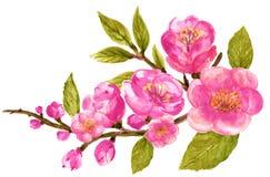 Akwarela bukieta wianku botaniczna ilustracja Chińskie kwiatów elementów menchie kwitnie kolekcję z liśćmi i okwitnięcie ręką ilustracja wektor