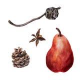 Akwarela cyprysu i sosny rożki z dojrzałą czerwoną bonkretą Obrazy Royalty Free