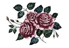 Akwarela dramat wzrastał Ciemny bukieta kwiat Ręka malująca sztuka Ilustracja valentine nastrój Obrazy Stock