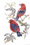 Akwarela dzicy egzotyczni ptaki na kwiatach Obraz Stock
