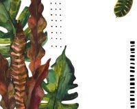 Akwarela egzot opuszcza tło Wodnego koloru tropikalny kwiecisty obraz Zdjęcie Royalty Free