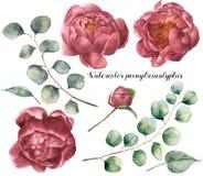 Akwarela eukaliptusa i peoni set Ręka malujący kwieciści elementy z kwiatami i eukaliptus gałąź odizolowywającą na bielu royalty ilustracja