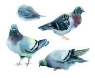 Akwarela gołębie Zdjęcie Royalty Free