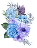 Akwarela guaszu eleganckiego rocznika protea różany anemonowy kwiat ilustracji