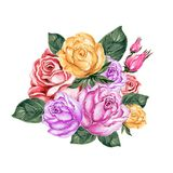 Akwarela guaszu ilustracyjnego cukierki różany bukiet na bielu plecy ilustracji
