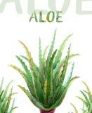 Akwarela ilustracyjny aloes Vera royalty ilustracja