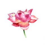 Akwarela ilustracyjny obraz lotos ilustracji