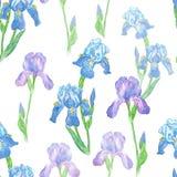 Akwarela irysowego kwiatu bezszwowy wzór na białym backgr Obraz Stock