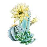 Akwarela kaktus royalty ilustracja
