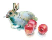 Akwarela królik Obrazy Royalty Free