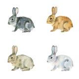 Akwarela króliki na białym tle Obrazy Stock