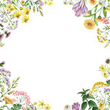 Akwarela kwadrata rama z medycznymi roślinami Fotografia Royalty Free