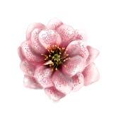Akwarela kwiat Zdjęcia Royalty Free