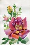 Akwarela kwiatu kolekcja: Wzrastał ilustracja wektor