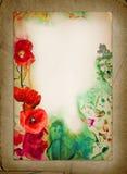 Akwarela kwiatu tło stary papier Kolaż robić fotografie maczki i akwarela Obrazy Royalty Free