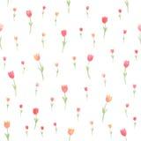 Akwarela kwiecisty bezszwowy wzór Tulipany również zwrócić corel ilustracji wektora Piękny tło Fotografia Royalty Free