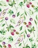 Akwarela kwiecisty bezszwowy wzór z kwiatami, malinką, gałąź i ulistnieniem, Obraz Stock