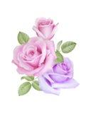 Akwarela kwiecisty bukiet róże Obraz Stock