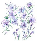 Akwarela kwiecisty wzór Subtelne pastelowe leluje Obrazy Stock