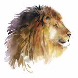 Akwarela lew na białym tło wektorze Obrazy Royalty Free