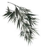 Akwarela liści bambusowa gałąź Obraz Royalty Free