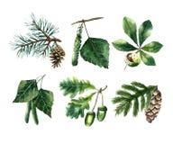 Akwarela liście ilustracja wektor