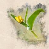 Akwarela malował pięknego żółtego tulipanu w szklanej filiżance zdjęcie royalty free