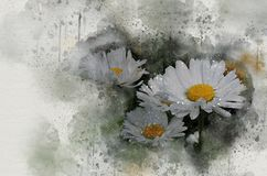 Akwarela malująca piękna biała stokrotka obrazy stock