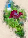 Akwarela malująca piękna czerwieni róża fotografia stock