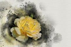 Akwarela malująca piękna kolor żółty róża obraz stock