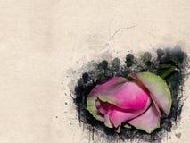 Akwarela malująca piękna menchii róża zdjęcia stock