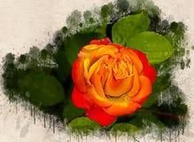Akwarela malująca piękna pomarańcze róża zdjęcie stock
