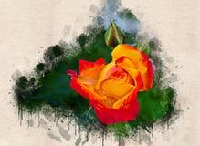 Akwarela malująca piękna pomarańcze róża zdjęcia stock