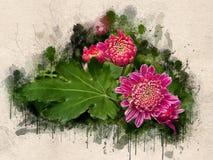 Akwarela malująca różowa chryzantema obraz royalty free