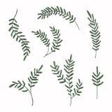 Akwarela malujący liście ustawiający Rozmaitość kształty ręka rysujący liść Kwiecisty elementu projekt Fotografia Stock