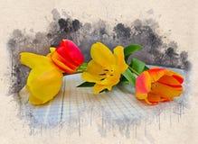 Akwarela malujący piękni żółci i czerwoni tulipany obrazy stock