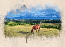 Akwarela malujący piękny brązu koń fotografia royalty free
