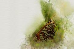Akwarela malujący piękny motyl zdjęcia stock