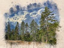 Akwarela malujący piękny pogodny las zdjęcia stock