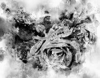 Akwarela malujący piękny wzrastał w czarny i biały obraz stock