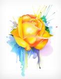 Akwarela obraz, kolor żółty róża ilustracja wektor