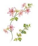 Akwarela obraz liście i kwiat ilustracja wektor