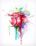 Akwarela obraz, róża kwiat ilustracji