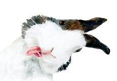 Akwarela obrazek ciekawy królik royalty ilustracja
