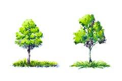 Akwarela obrazu drzewa na białym papierze odizolowywali tło obraz royalty free
