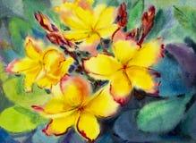 Akwarela obrazu oryginał na papierowy kolorowym żółty plumeria kwitnie ilustracji