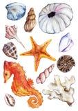 Akwarela oceanu seahorse dennego seashell ammonit czesaka koralowy set Zdjęcia Stock