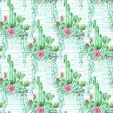 Akwarela paskował bezszwowego deseniowego tło z sukulentami i kaktusem Obraz Stock